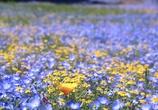 お花の絨毯 @ブルーボネット