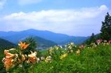 ユリの丘から @谷汲ゆり園