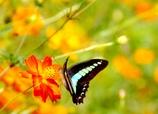 花と蝶#1
