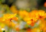 花と蝶 花のみ