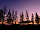 初冬の夕暮れ @デンパーク前の並木道