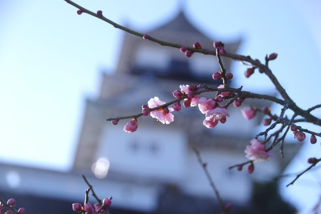 もーすぐ春ですね#1 @掛川城