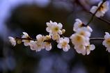 春間近#2 @鞍ヶ池動物園
