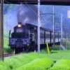 茶畑と @大井川鉄道
