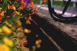自転車道脇の花壇