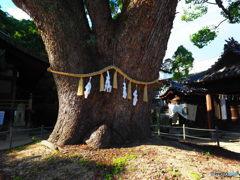 ゲニウス・ロキの宿る樹