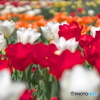 mixed flowers 3