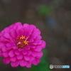近くのお花3