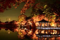 岡崎 東公園紅葉ライトアップ