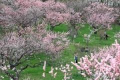 札幌梅林公園