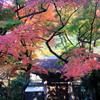 そうだ、鎌倉へ行こう!