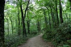 ブナの森で