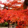 晩秋の鎌倉・円覚寺