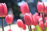春の先取り~♬
