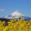吾妻山の春
