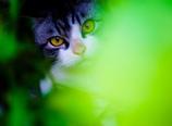 緑の隠れ家