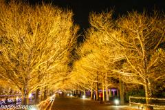 国営昭和記念公園 Winter Vista Illumination (8)