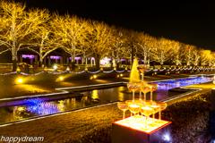 国営昭和記念公園 Winter Vista Illumination (5)