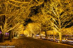 国営昭和記念公園 Winter Vista Illumination (2)