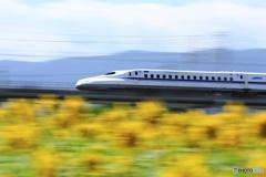 新幹線とヒマワリ  180818