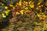 神庭の秋の色④