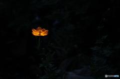 闇の中の光