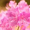 春…♡*. ゚