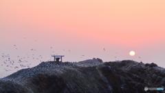経島に陽が暮れて