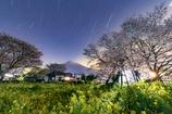 仮宿の下馬桜