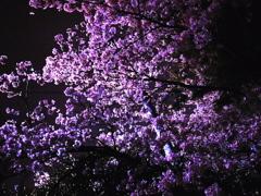 広島ベイエリア。。