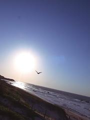 空を自由に飛ぶ。。。