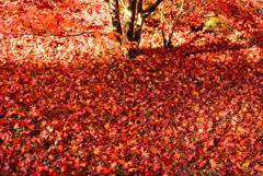 秋深し。。