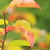 秋の一遍。。