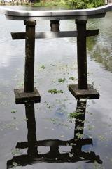 金鱗湖 鳥居