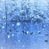 """Forest  of snow♪**"""""""