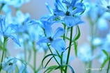 """**""""Blue lnn Blue**"""""""