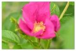 """悲しく そして美しく~♪**""""pink"""