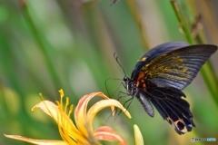 花と蝶(暑い夏)