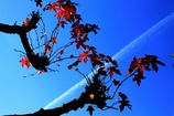 さりげない秋の空
