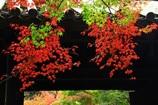 山門の赤・緑モミジ