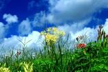 雲と彼岸花