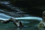 渓流の流木