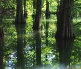 湖面の木立