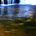 CANON Canon EOS Kiss X7iで撮影した(落葉の舞い)の写真(画像)