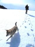 愛犬が走る