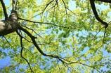 新緑のグラデーション