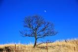 青空に・・・月