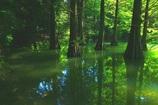 幽玄の湖面