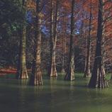 2016  晩秋の九大の森