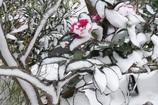 ・・冬花・・